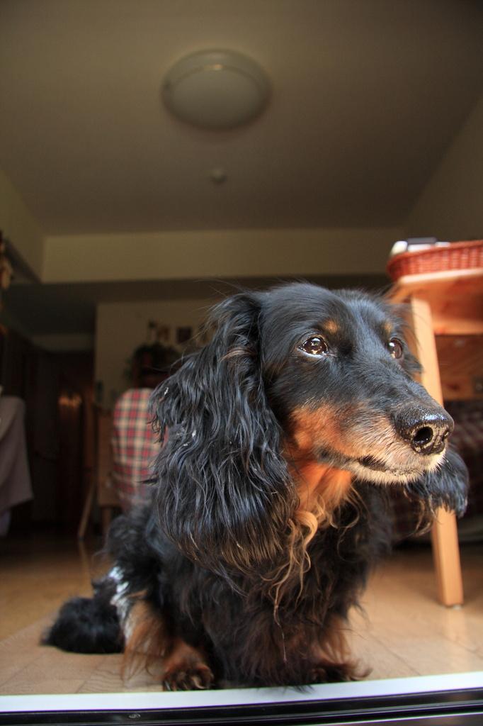 愛犬ジャック