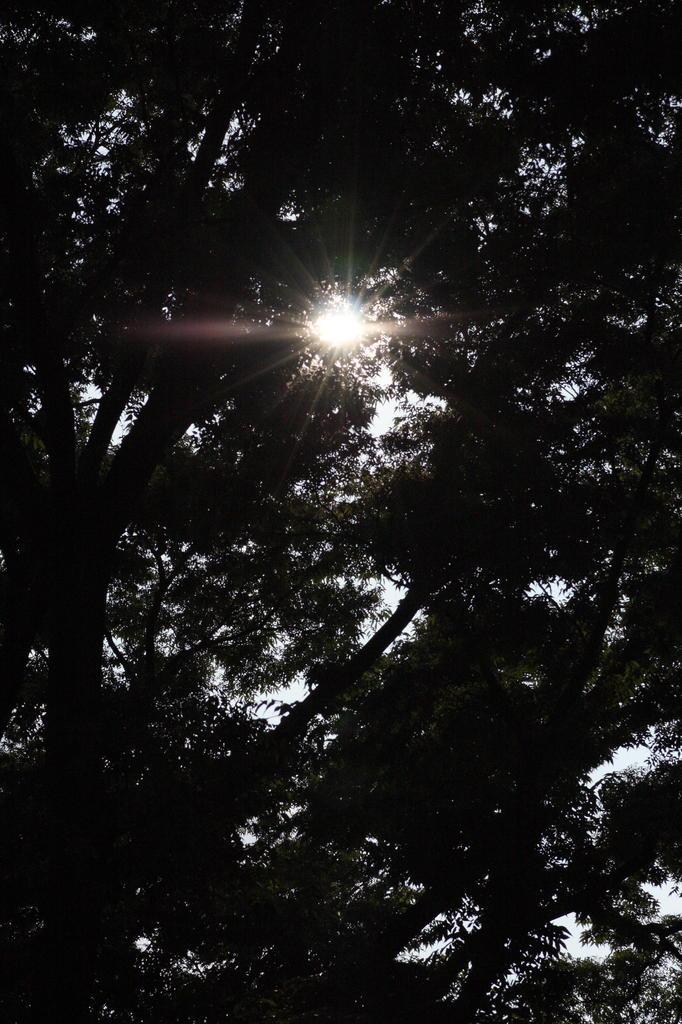 森の中のビッグバン