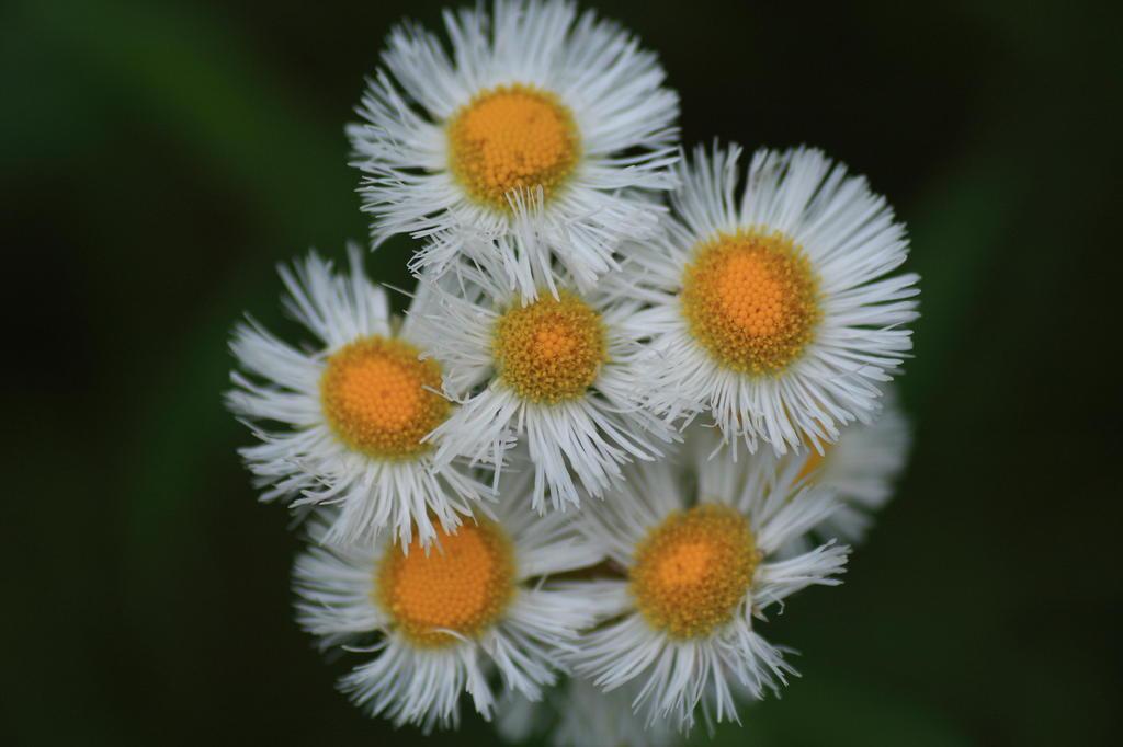 花の命は短くて