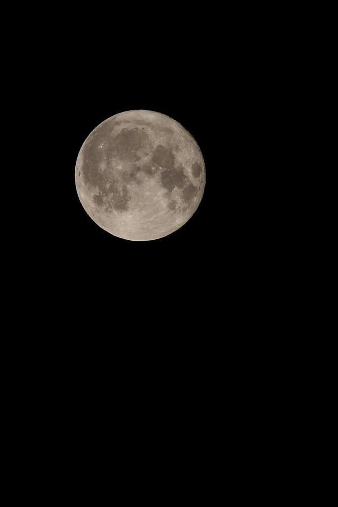 月に吠えろ
