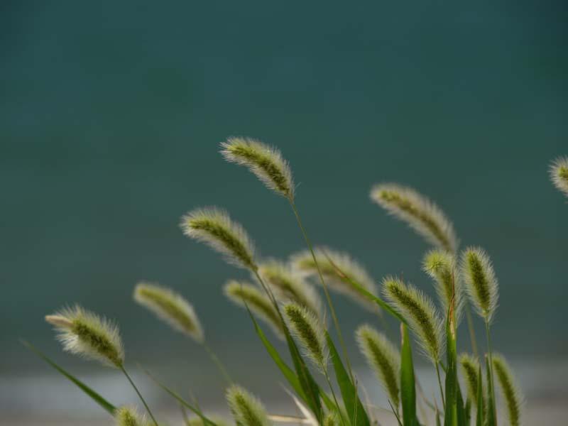海岸で風を感じて