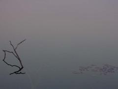 湖に映る風景