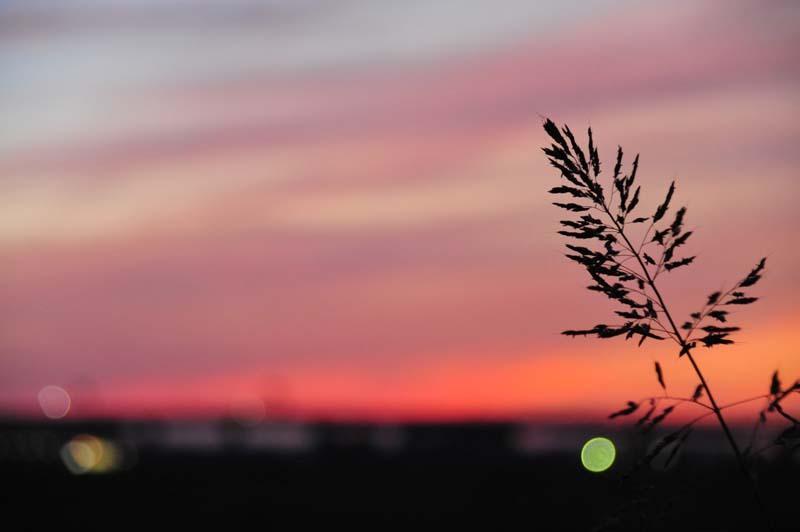 夕陽の海を見下ろす場所で