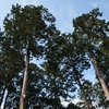 見守る木々達