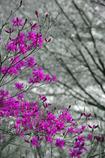 山で出逢った紫