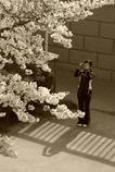 桜、撮ります♪