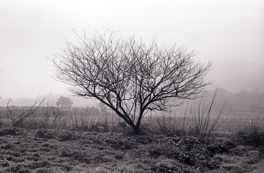 昭和劇場 「木」