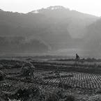 PENTAX ASAHI PENTAX MXで撮影した風景(昭和劇場 「朝」)の写真(画像)