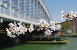 大川の春 2009
