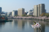 大川の春 2009 Ⅱ