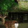 奈良と言えば・・・
