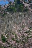 屏風岩と山桜