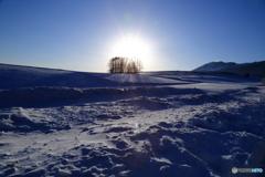 雪原の朝日