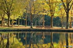 紅葉する公園