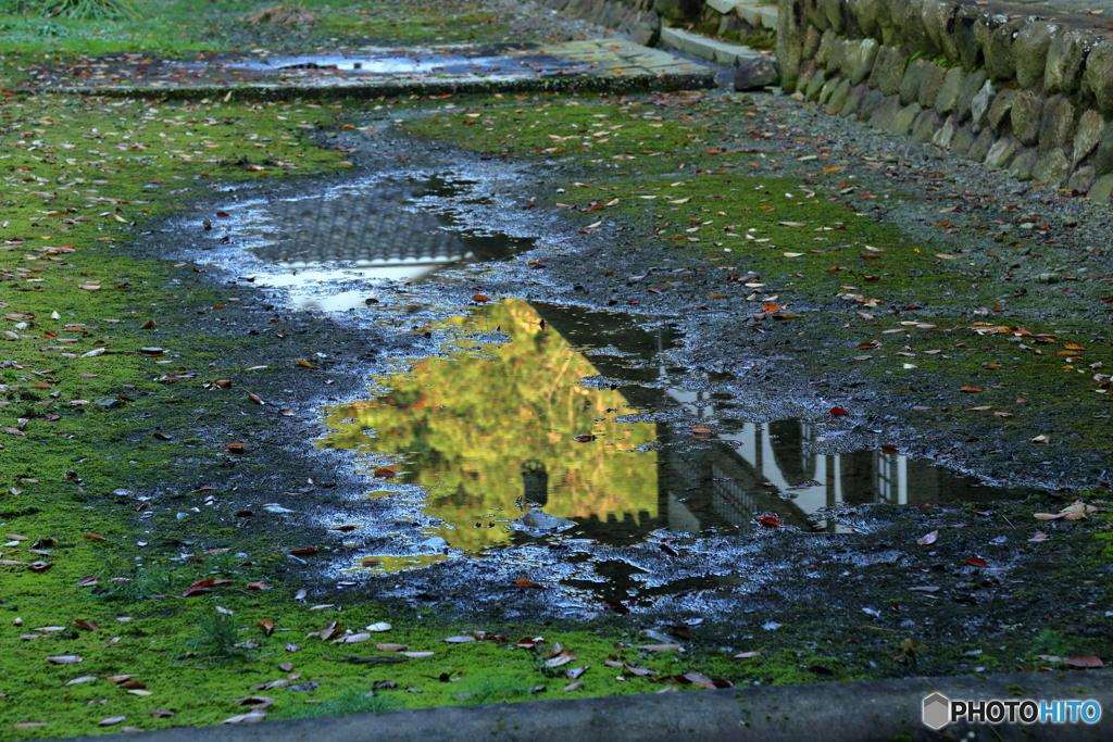 秋の映り込み