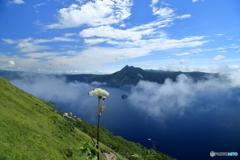 花と摩周湖