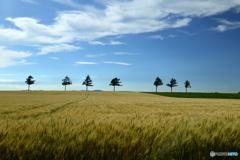 北の大地の風景