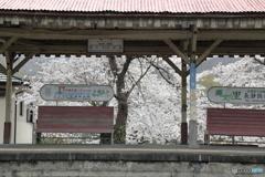 桜のホーム