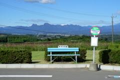コスモス畑のバス停