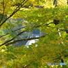 紅葉と吊り橋