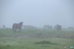 foggy horse