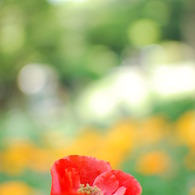 NIKON NIKON D40Xで撮影した植物(花)の写真(画像)