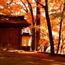 結願寺-大窪寺の紅葉