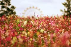 お花達が見た風景①♪