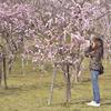 梅祭り-④