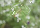 白い花と、、、