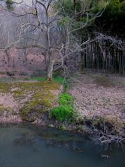 早春の植物園
