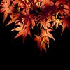 silent autumn