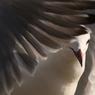 カモメの翼
