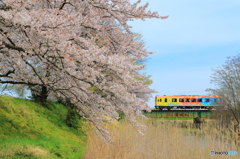 春色電車 3