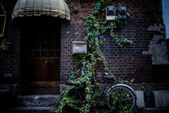 蔦と自転車