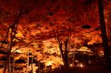 夜の紅葉 in 山中湖