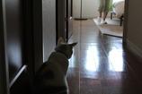 廊下とモニカ