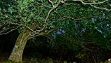 木集まりて神と成す