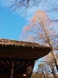 深大寺の空