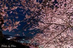 夜桜と高速道路
