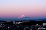 今朝の紅富士