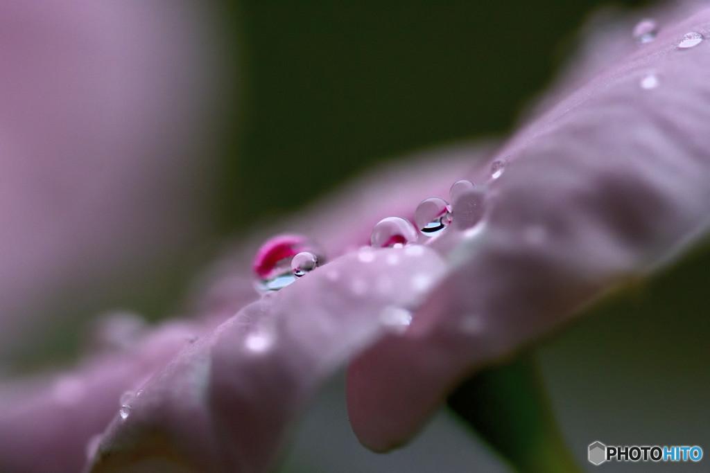 秋雨からの贈り物