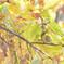 晩秋の葉陰に憩う