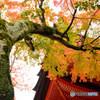 秋(安芸)の宮島