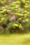 新緑ー花弁ー