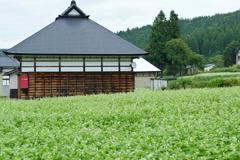 奥会津 蕎麦畑