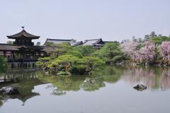 春の東神苑