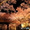 高遠の夜桜