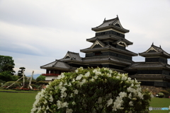 花の松本城