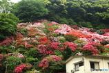 裏山の花園